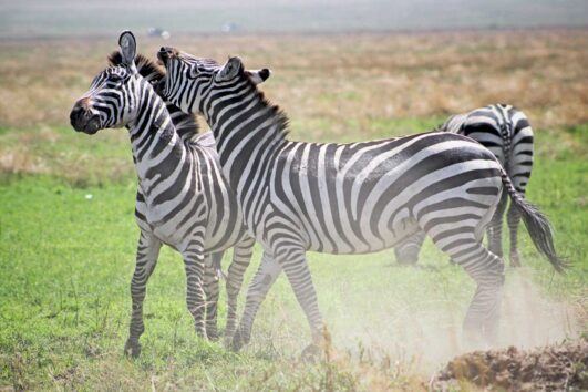 Tanzania Safaris group joining