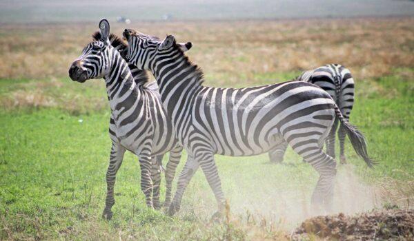 Tanzania Safaris group joining