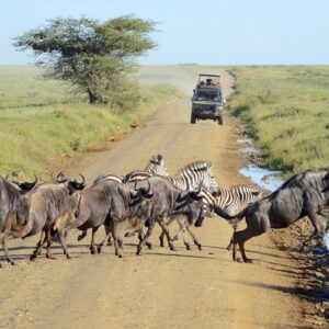 3Days / 2 Nights Serengeti/Ngorongoro Crater