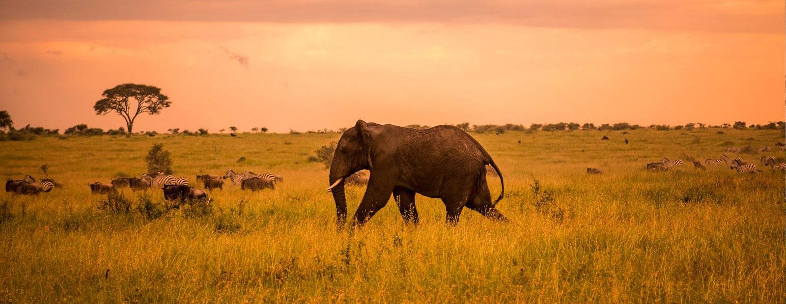 3 Days Serengeti and Ngorongoro